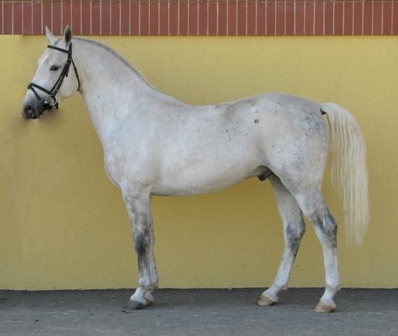 Konji Ergele