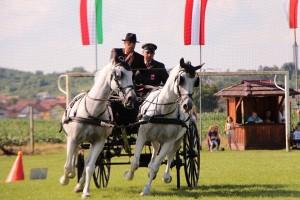 Državni prvak iz Državne ergele Đakovo i Lipik