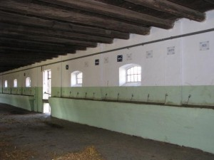 Uređenje štala na za smještaj konja lipicanaca na lokaciji Ivandvor